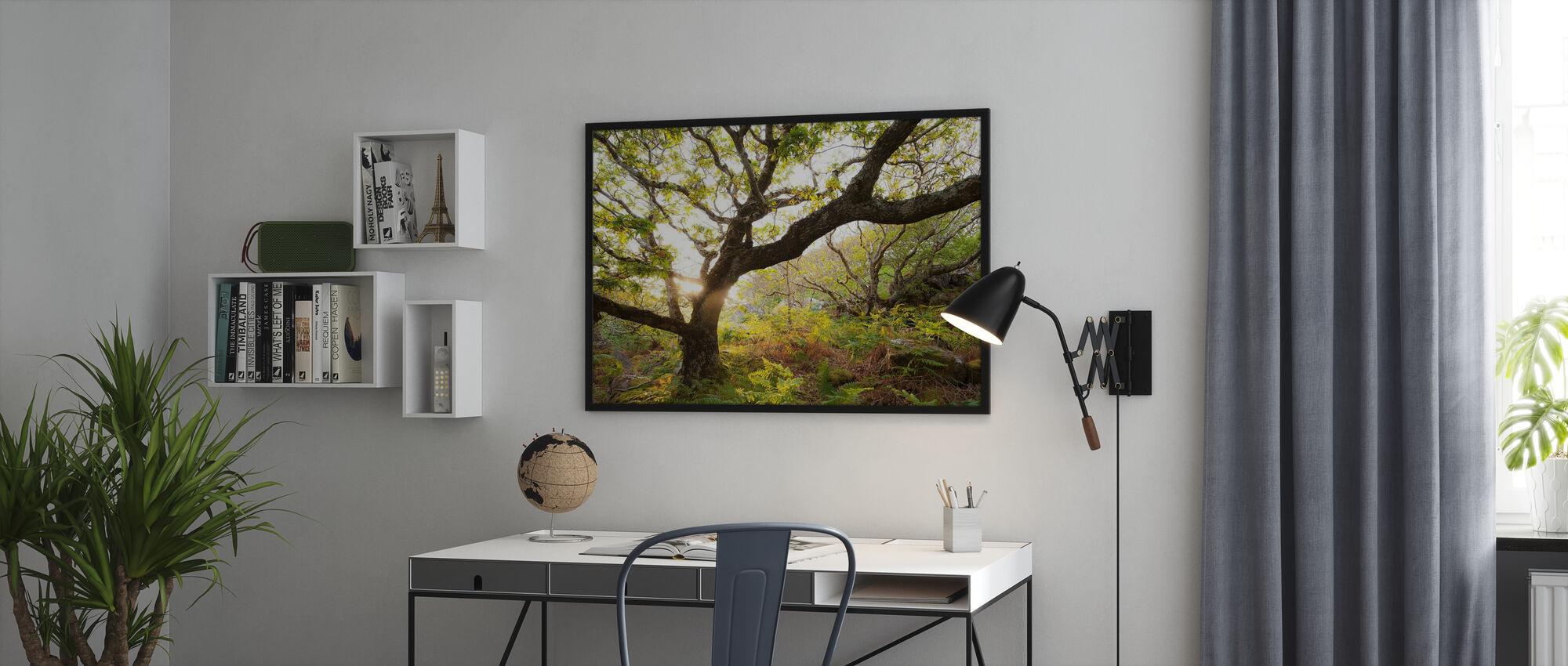 Backlit Scottish Oak Wood - Poster - Office