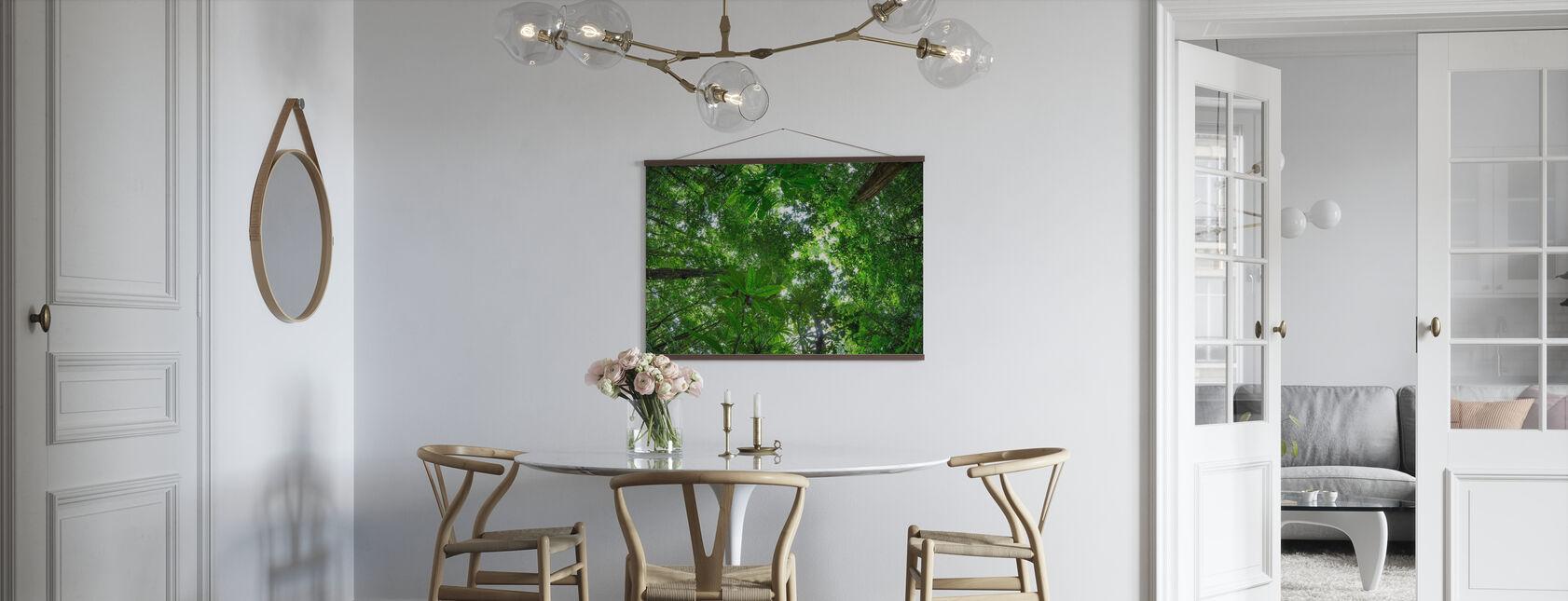 Rainforest Canopy - Poster - Kitchen