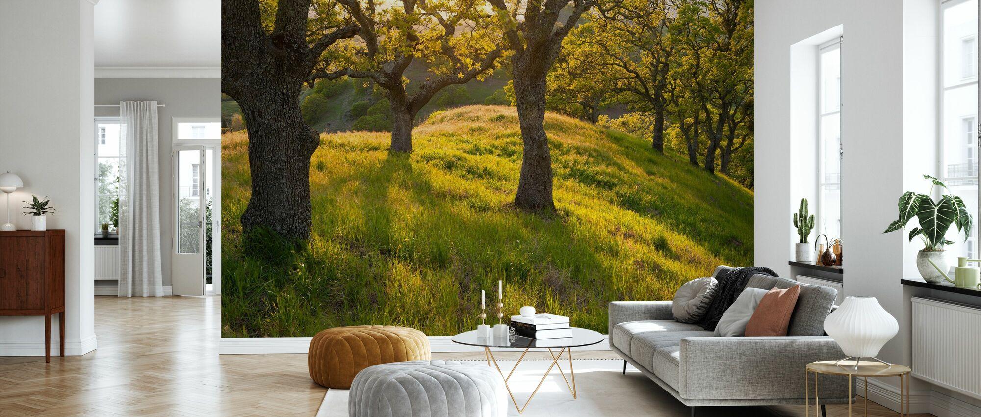 Late Afternoon Sunshine Streams, Mount Diablo, California - Wallpaper - Living Room