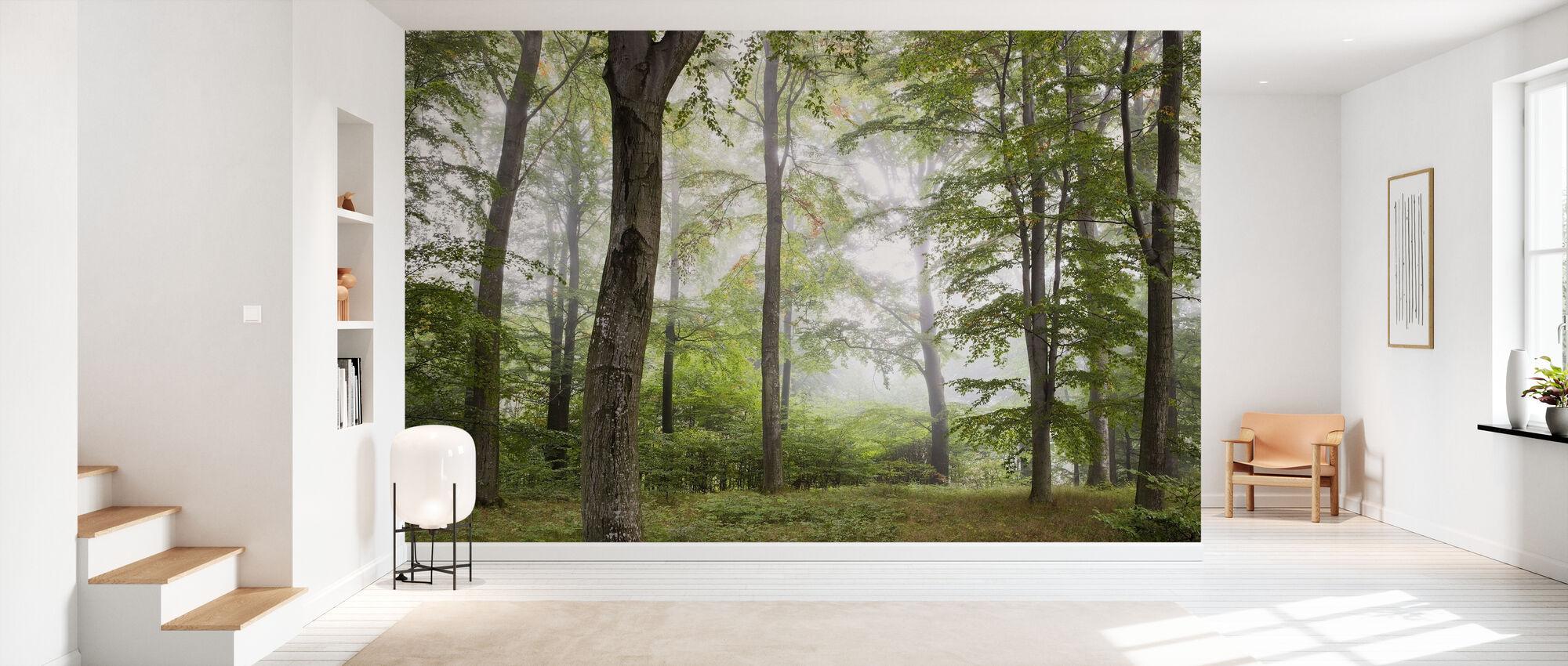 Brouillard forestier - Papier peint - Entrée