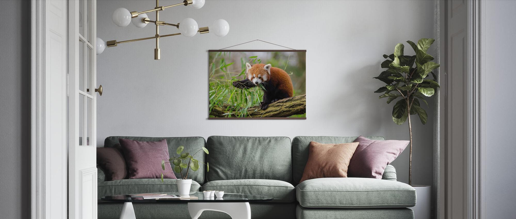 Little Red Panda - Poster - Living Room
