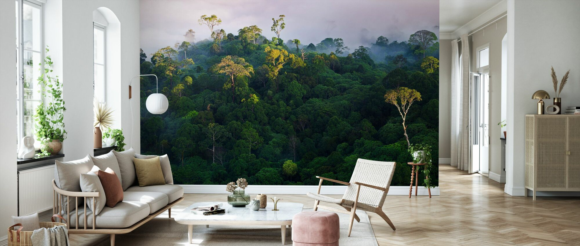 Sunrise at Lowland Rainforest - Wallpaper - Living Room