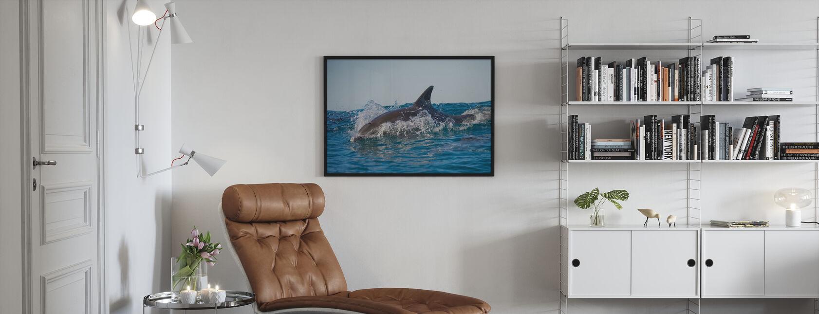 Bottlenose Dolphin - Framed print - Living Room