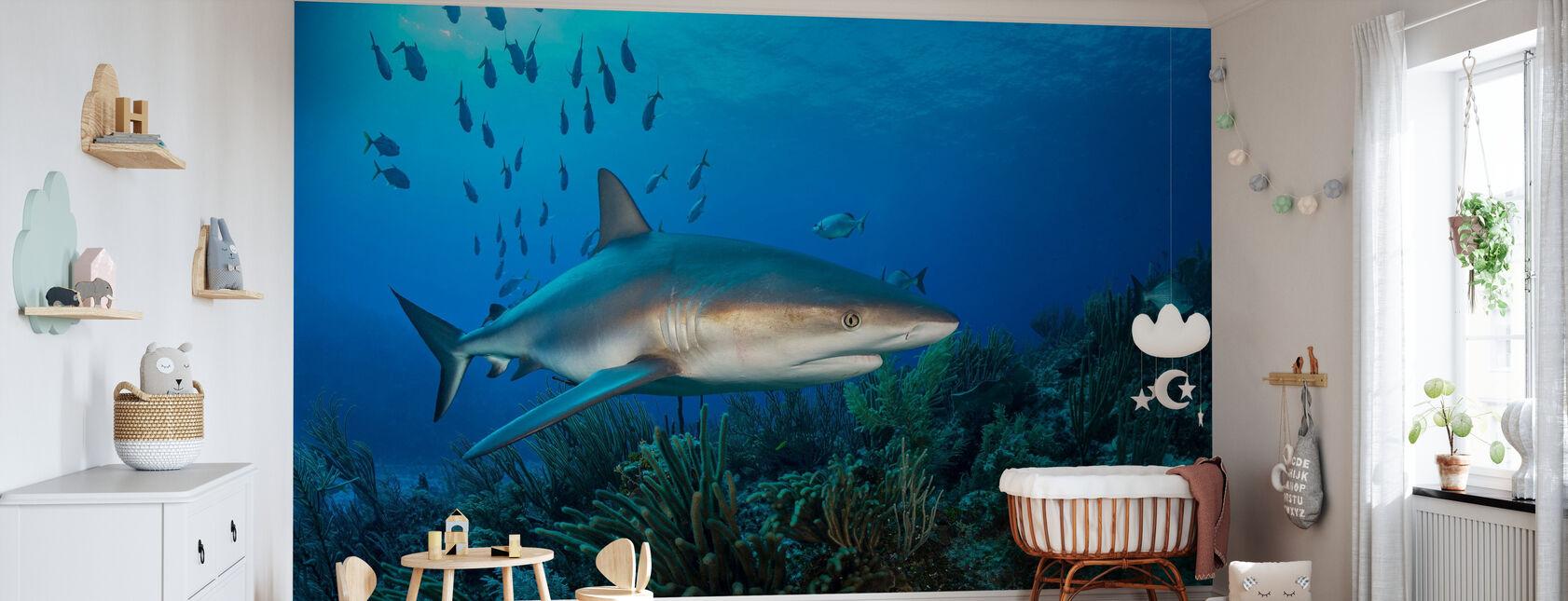 Caraïbische rif haai - Behang - Babykamer