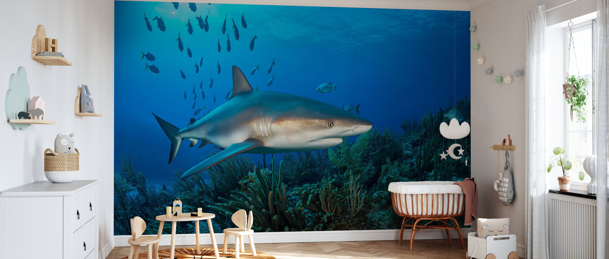 Caribbean Reef Shark - Wallpaper - Nursery
