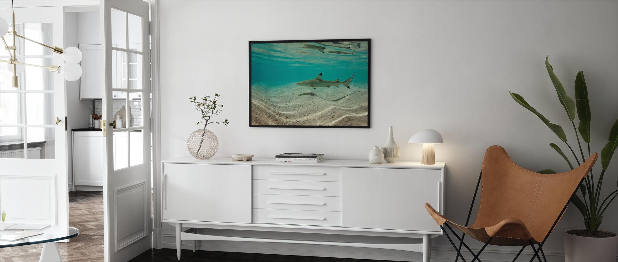 Blacktip Rif Shark - Ingelijste print - Woonkamer
