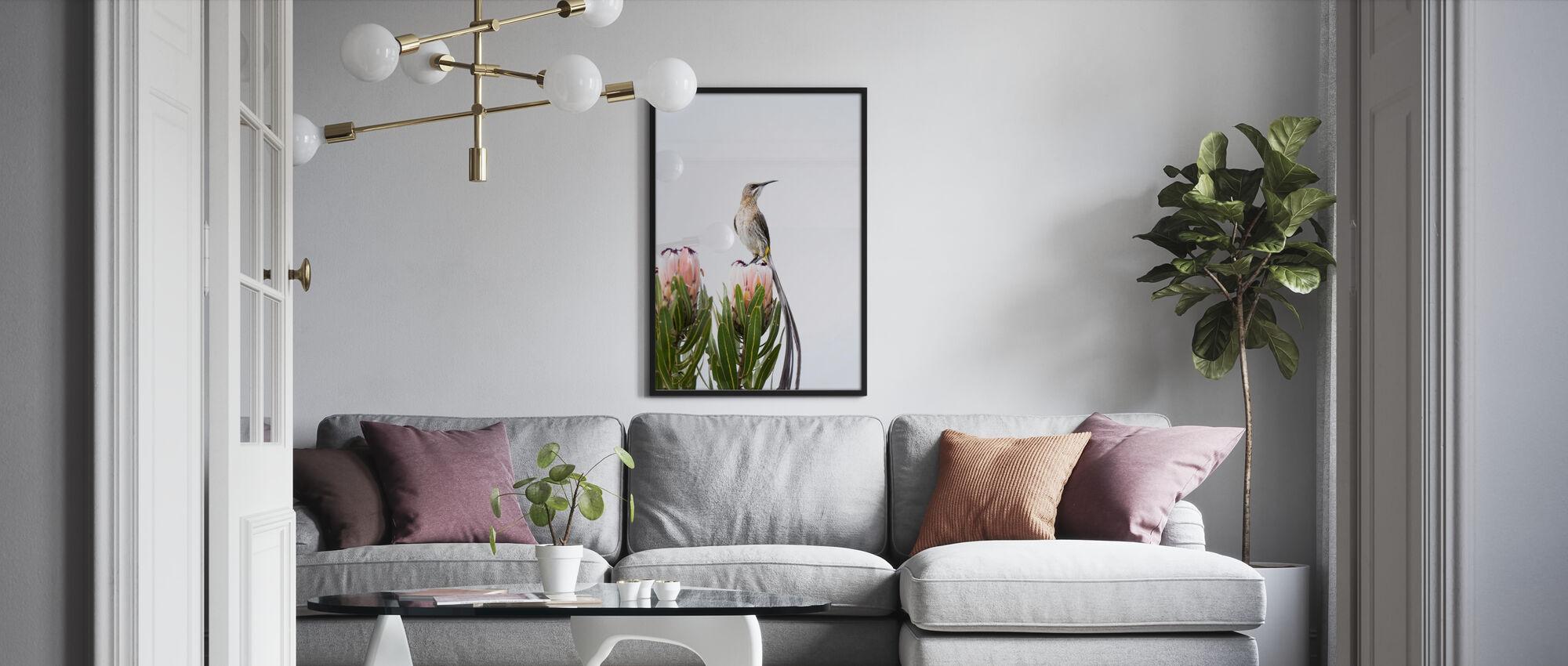 Cape Sugarbird - Affiche - Salle à manger