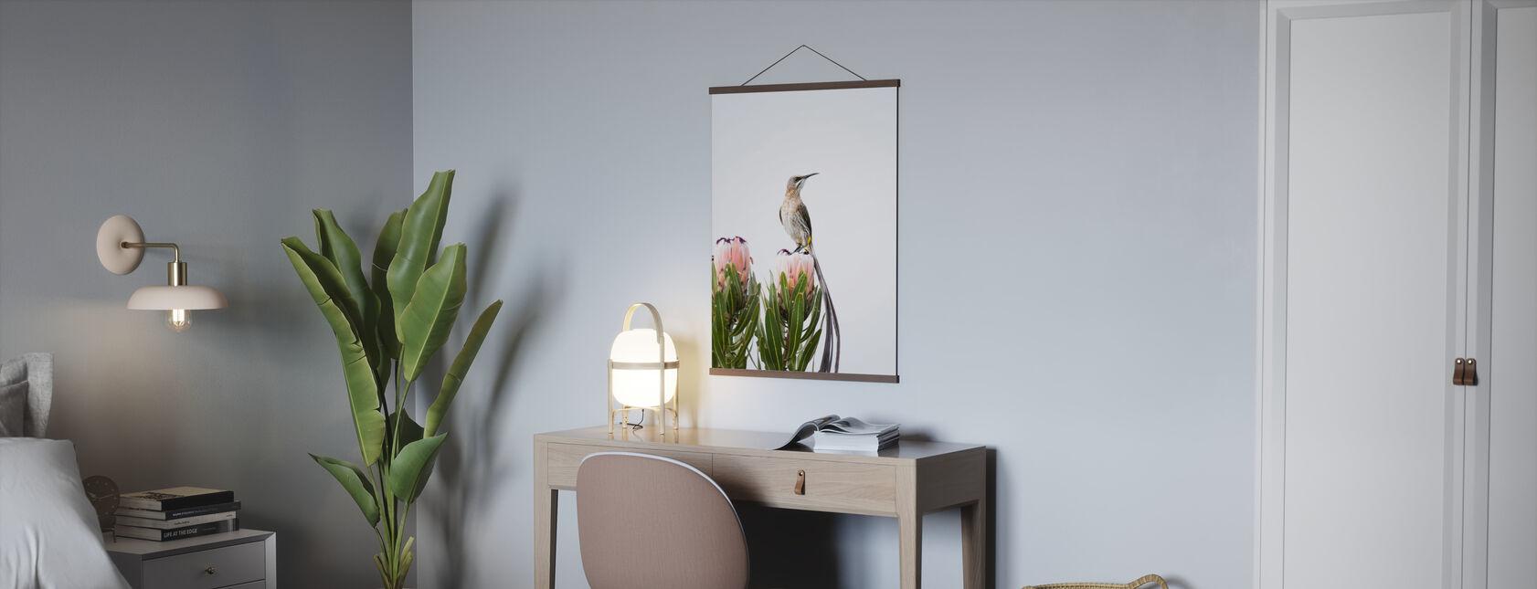 Cape Sugarbird - Poster - Kantoor
