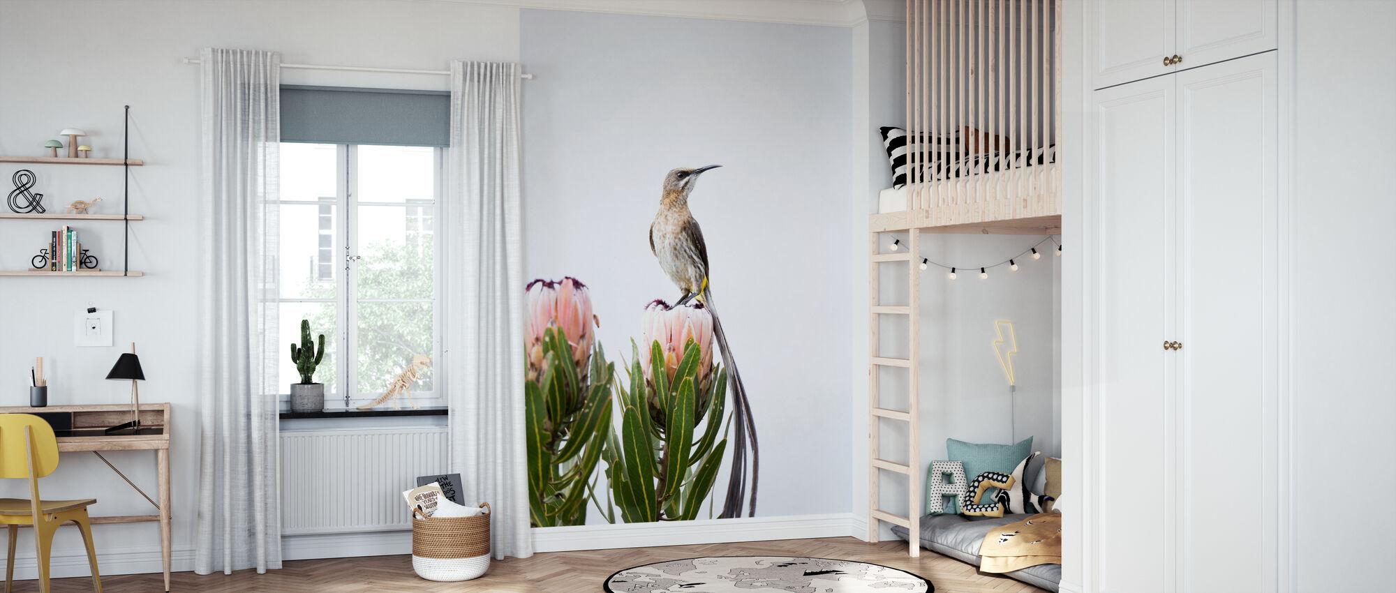 Cape Sugarbird - Wallpaper - Kids Room