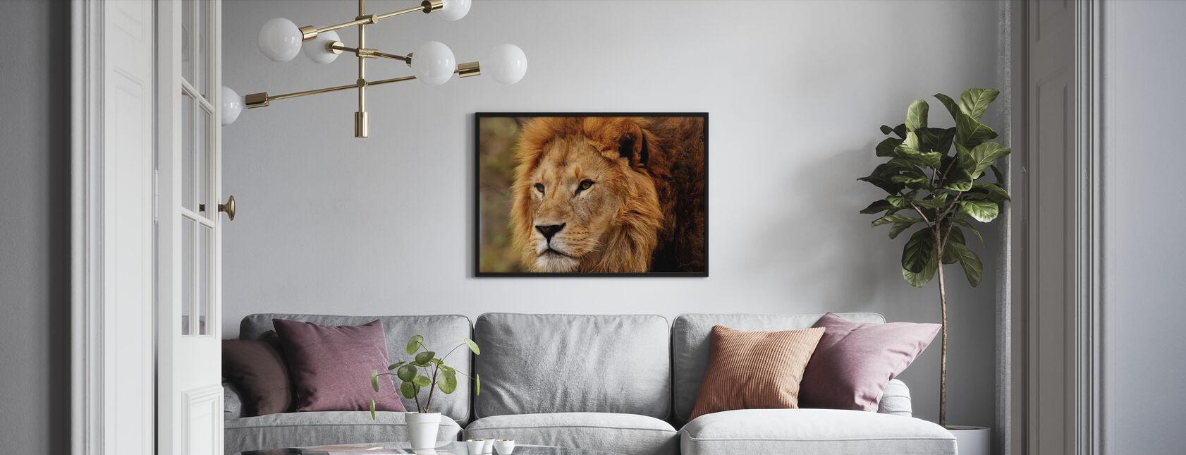 Löwe starrend - Gerahmtes bild - Wohnzimmer