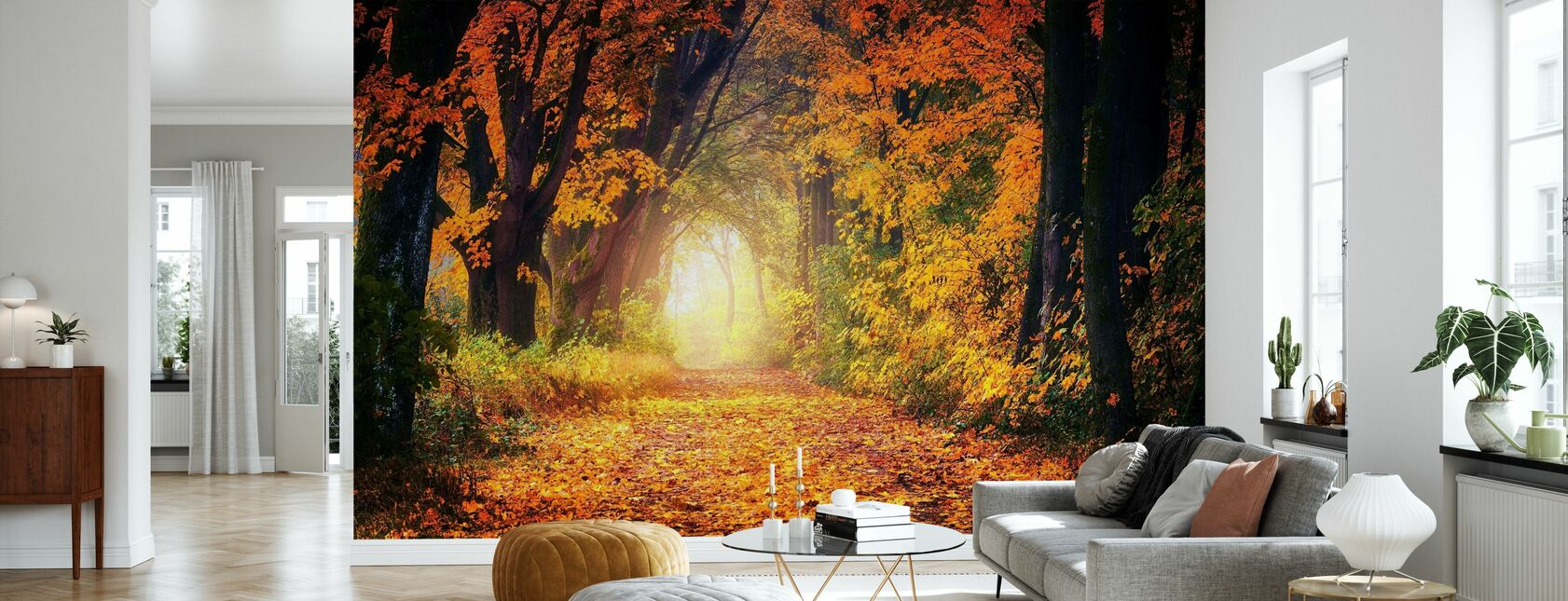 Forest Path - Wallpaper - Living Room