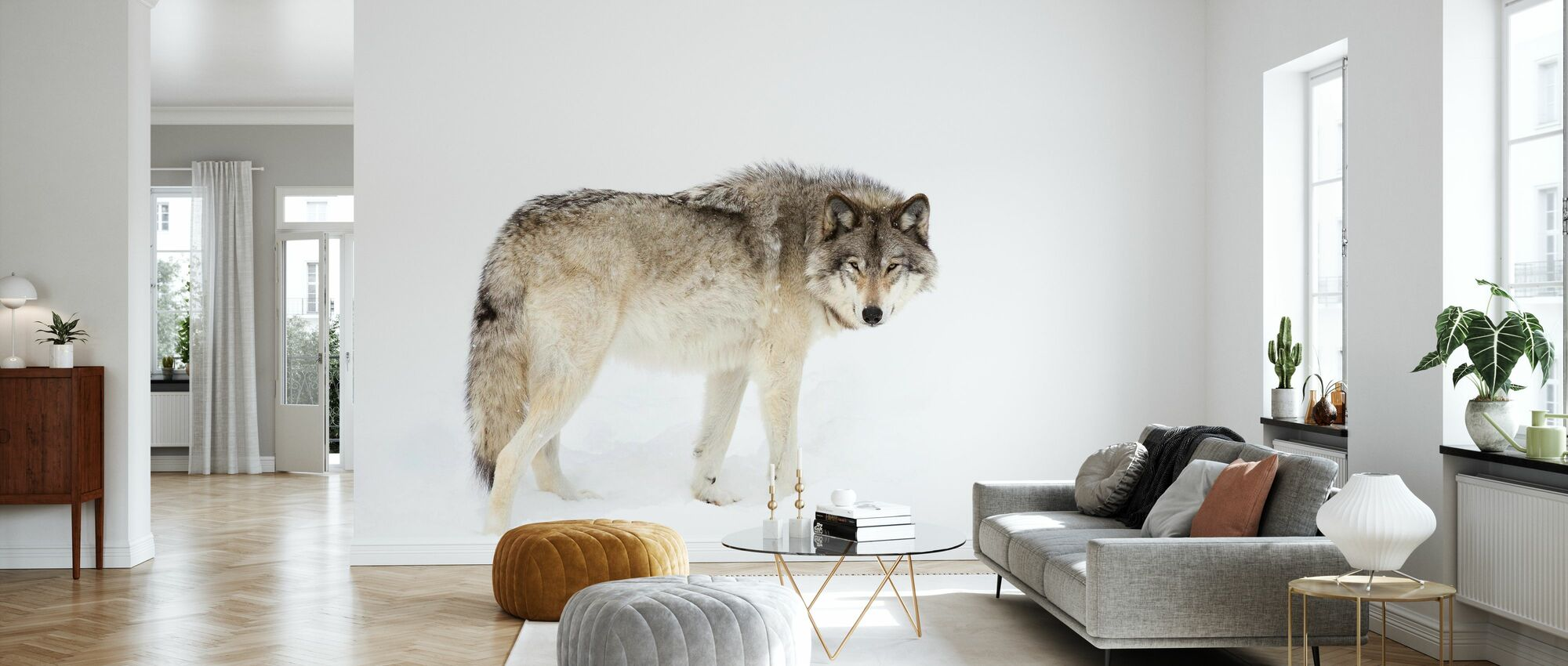 Canadian Timber Wolf Walking Through The Snow - Wallpaper - Living Room