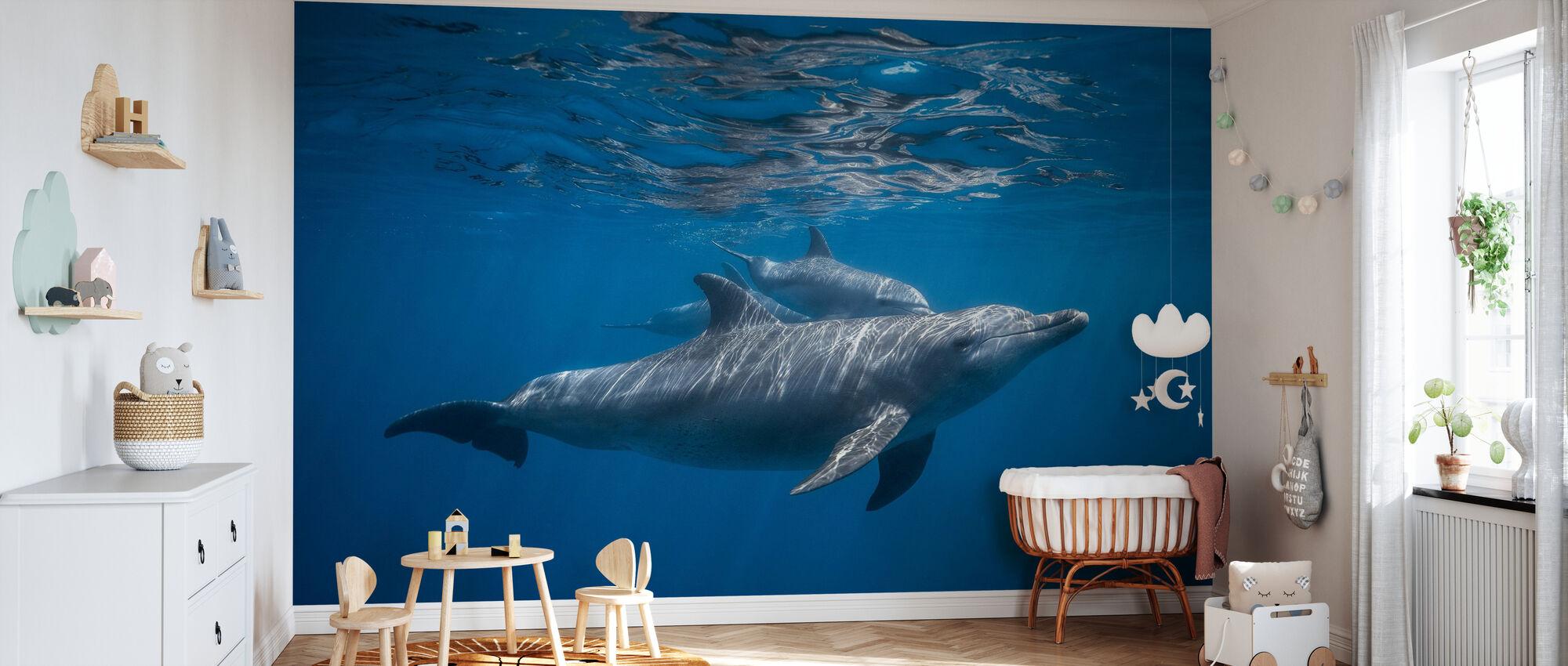 Pod of Dolphin - Wallpaper - Nursery