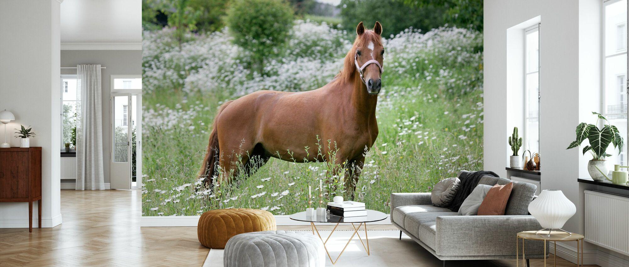 Häst på fältet - Tapet - Vardagsrum