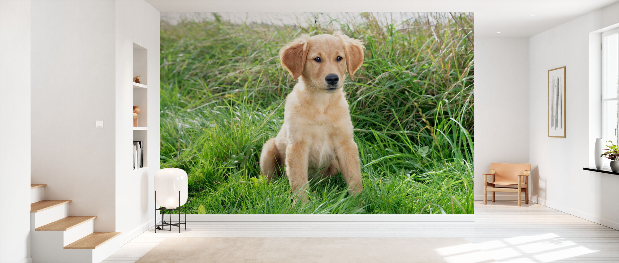 Golden Retriever Puppy in Meadow - Wallpaper - Hallway