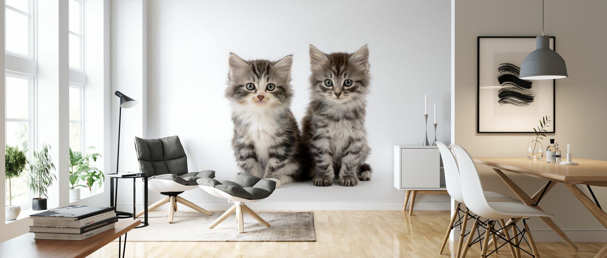 Katten Witte Achtergrond - Behang - Woonkamer