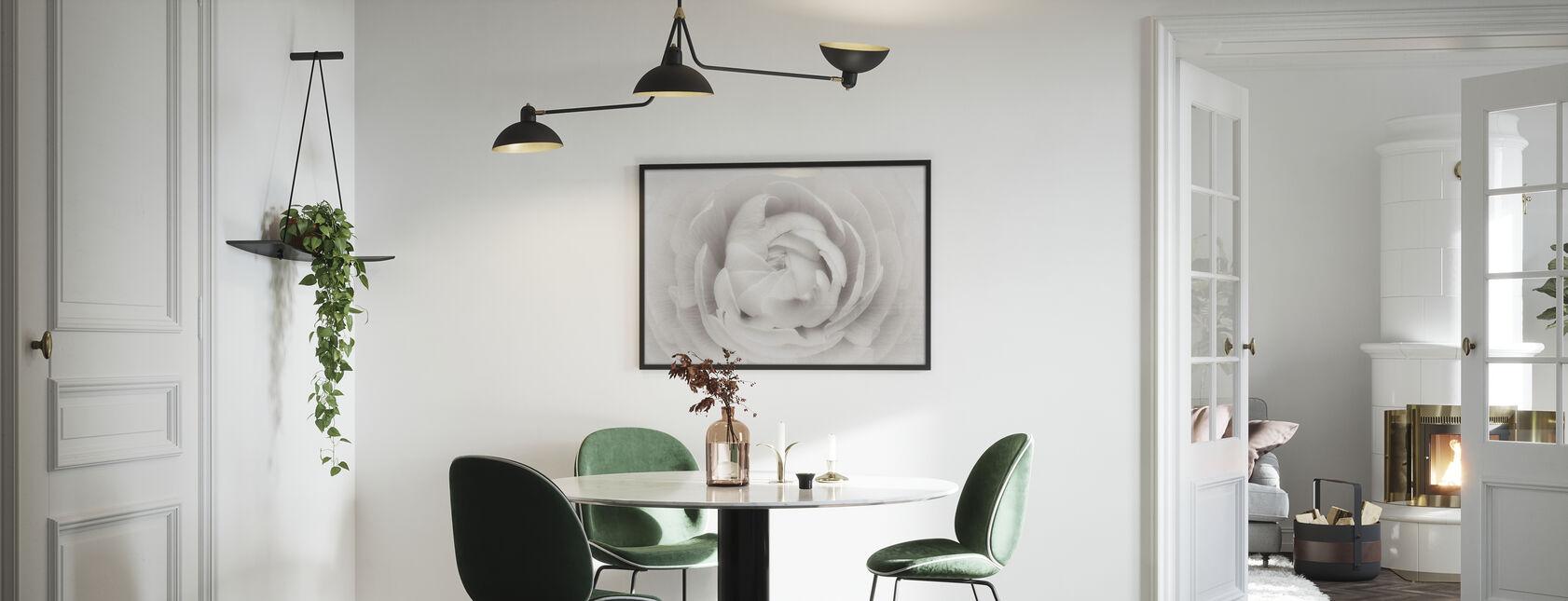 Ranunculus - Framed print - Kitchen