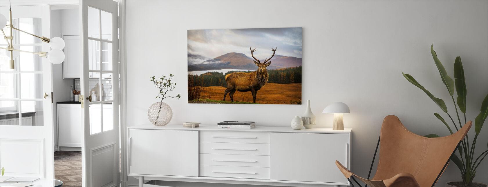 Skotsk hjort - Lerretsbilde - Stue