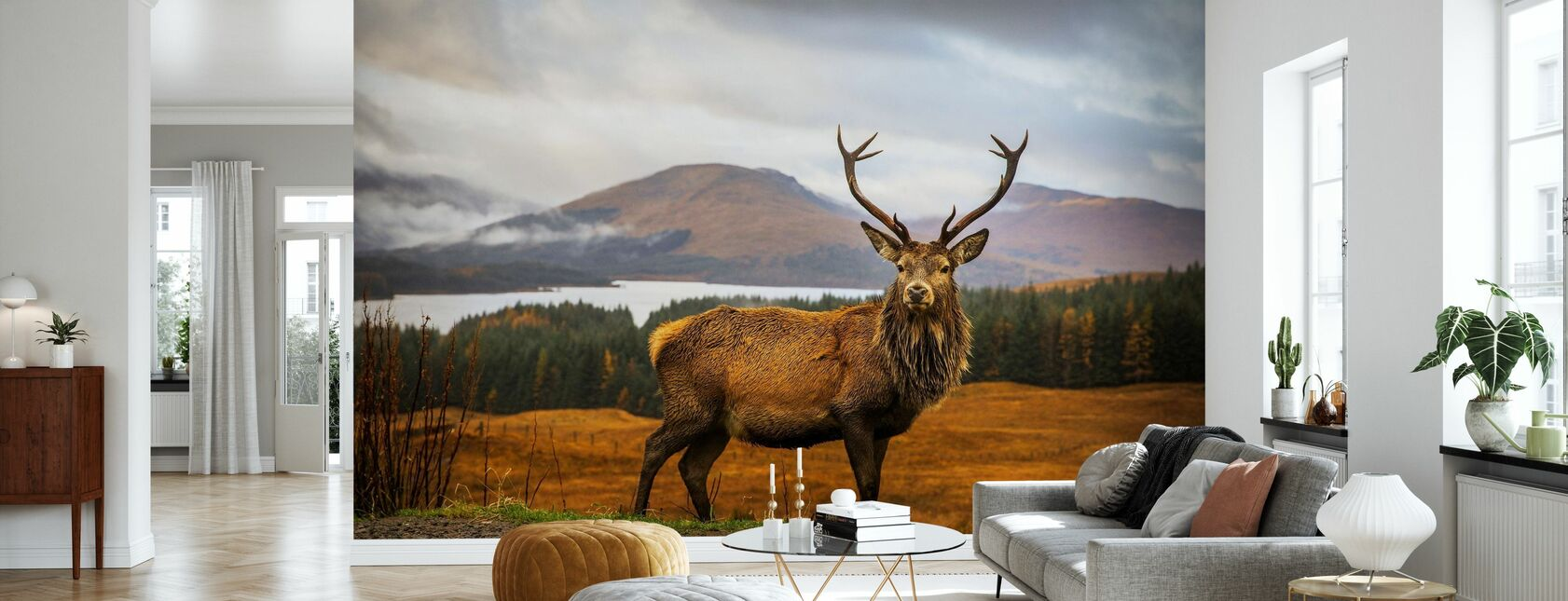 Scottish Stag - Wallpaper - Living Room