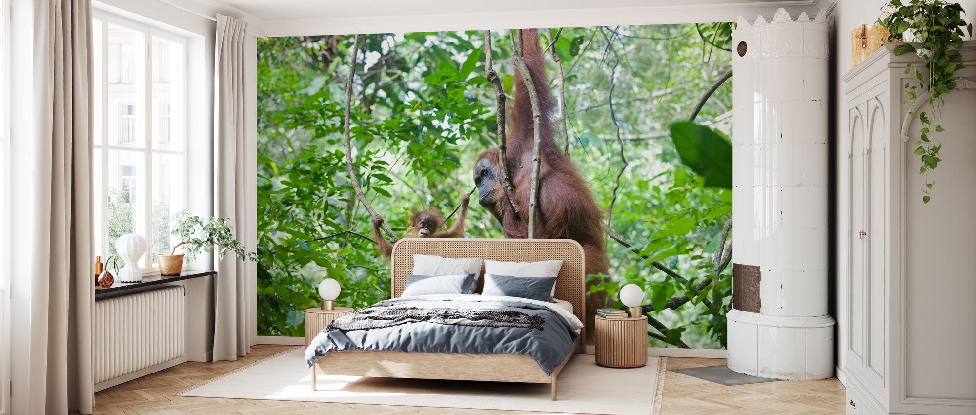 Mor og baby orangutan - Tapet - Soverom
