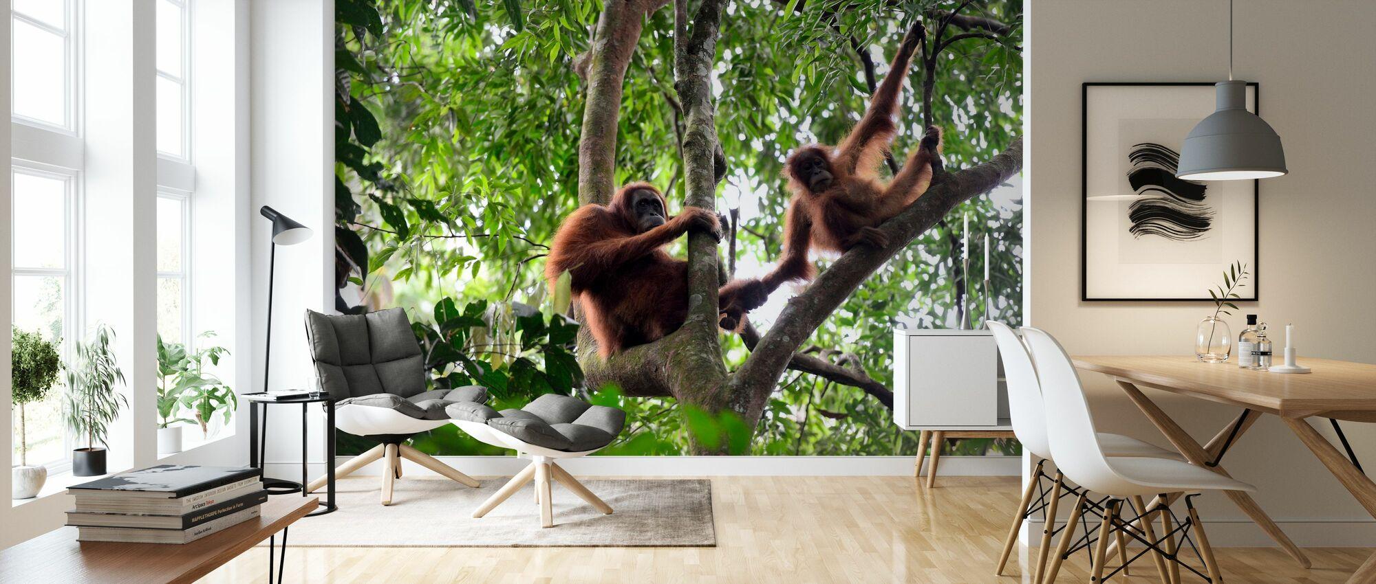 Vrouwelijke en zuigelingen-orang-oetan - Behang - Woonkamer