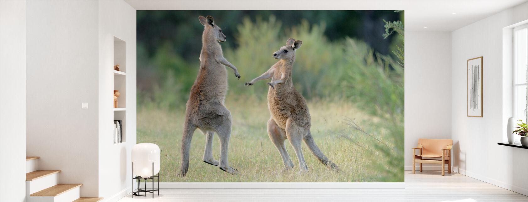 Eastern Grey Kangaroo - Wallpaper - Hallway