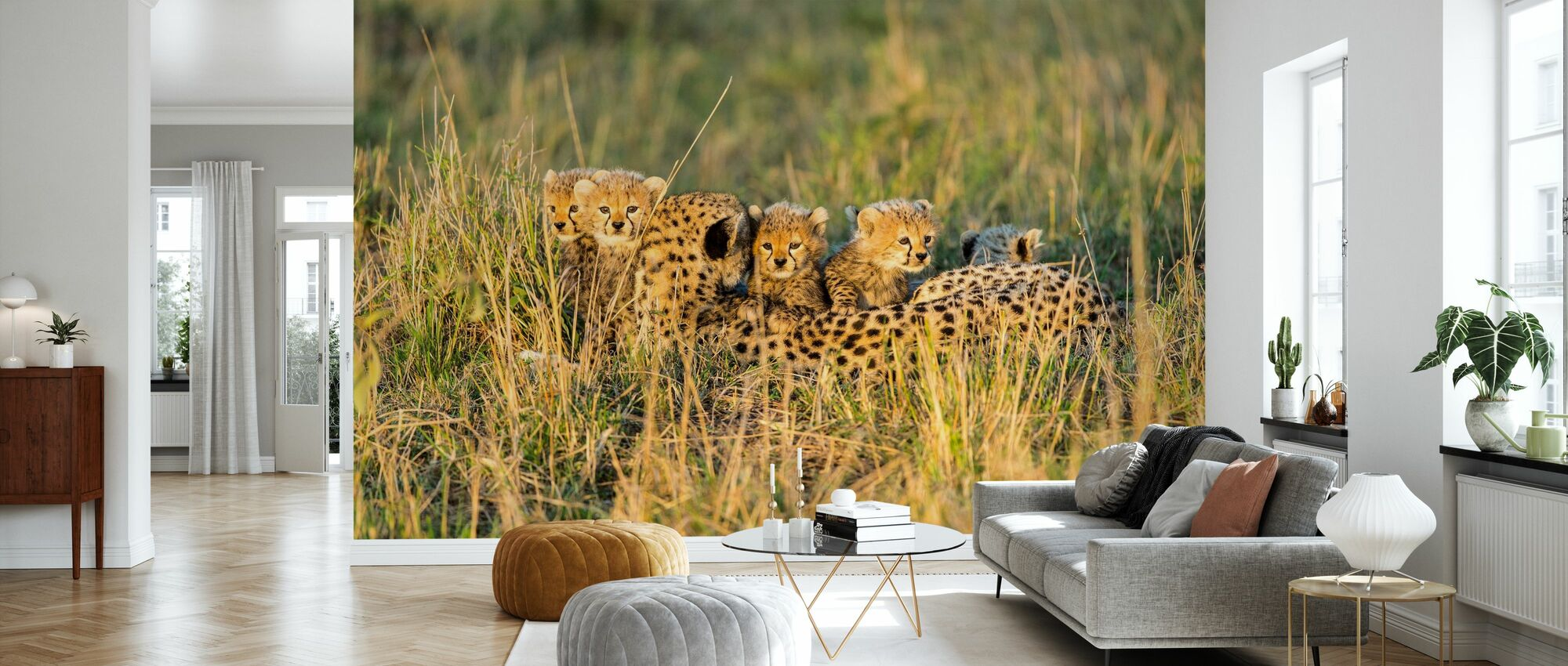 Female Cheetah and Cubs - Wallpaper - Living Room