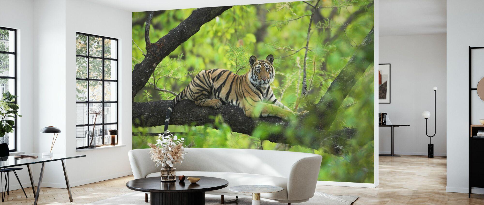 Tiger Resting in Tree - Wallpaper - Living Room