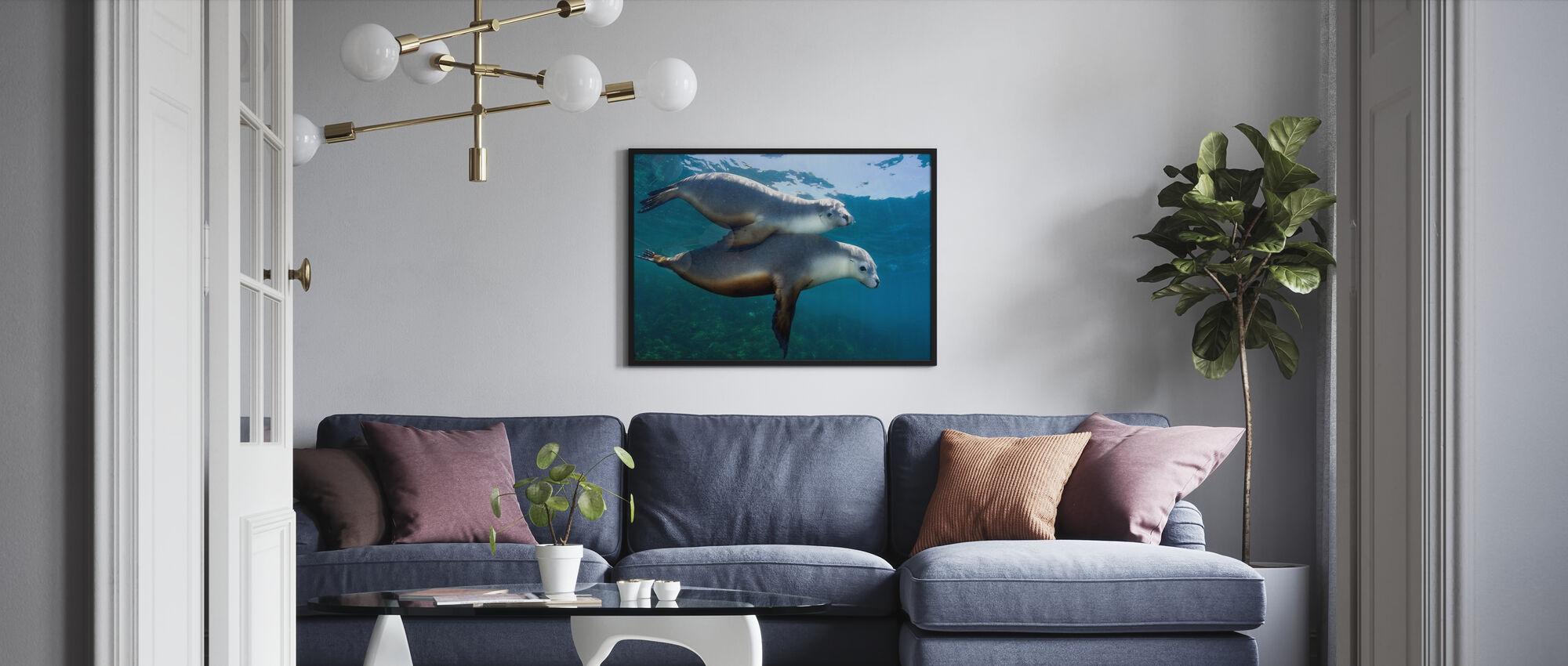 Par av sjøløver - Plakat - Stue