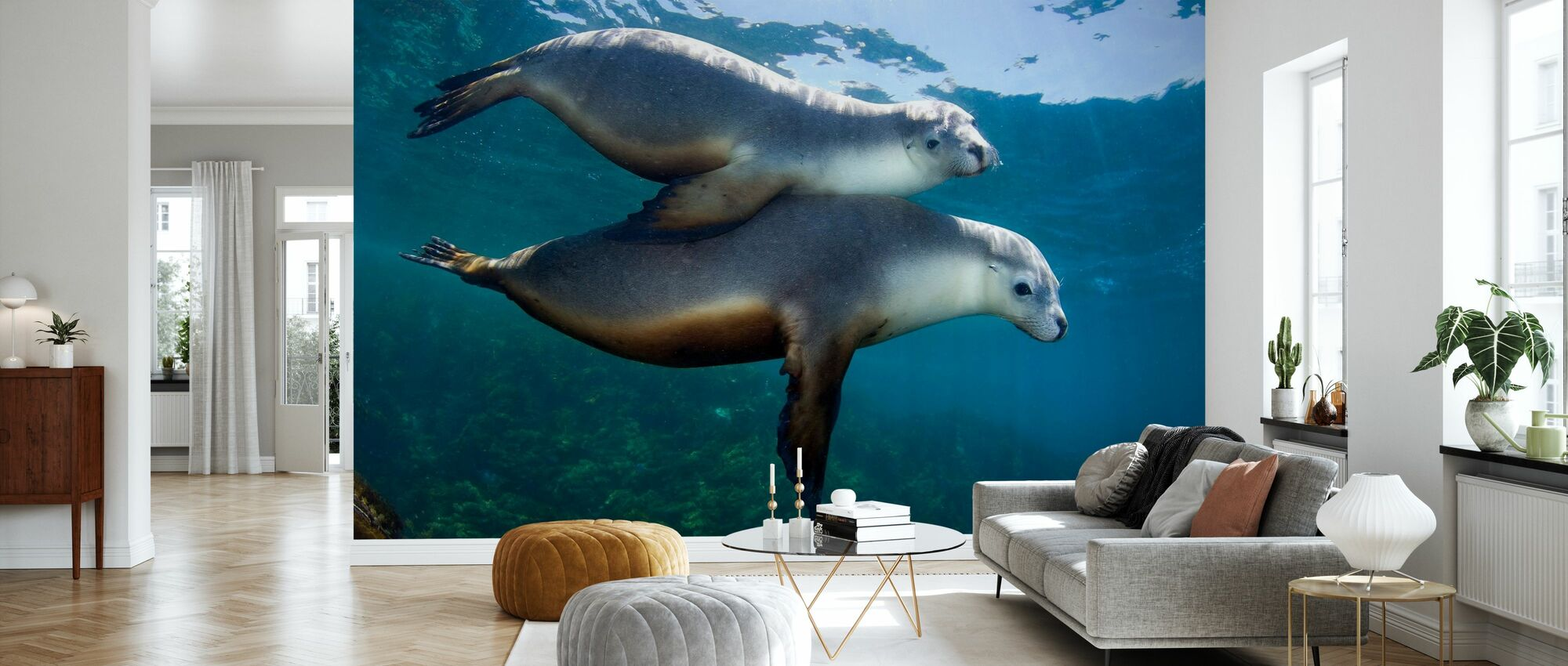 Pair of Sea Lions - Wallpaper - Living Room