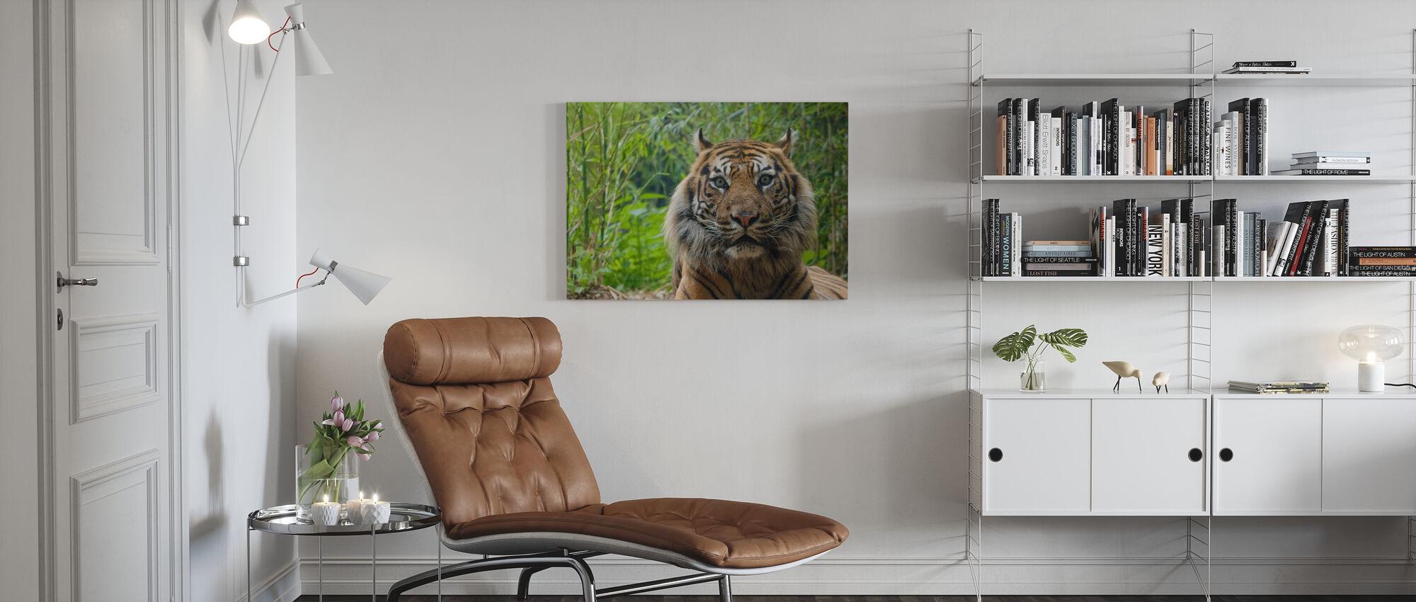 Mannelijke Sumatraanse Tijger - Canvas print - Woonkamer