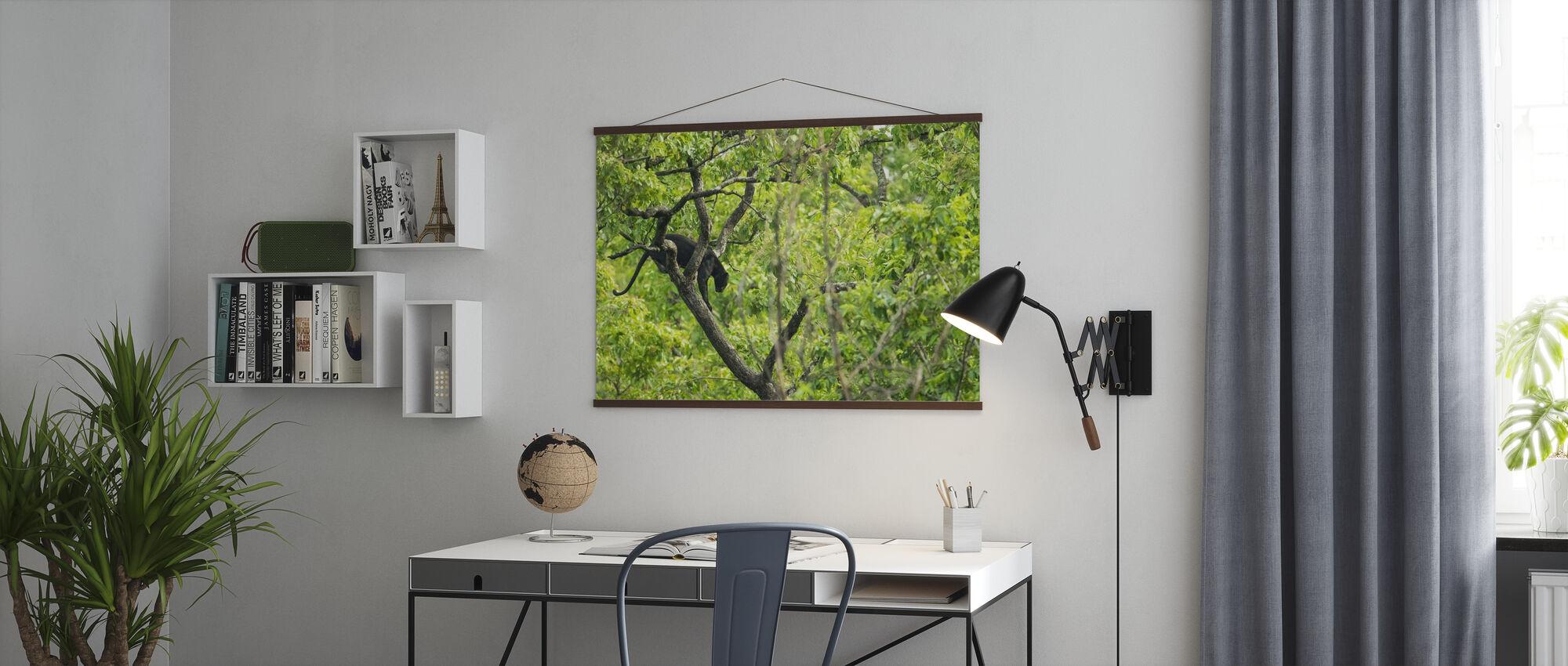 Svart panter i treet - Plakat - Kontor