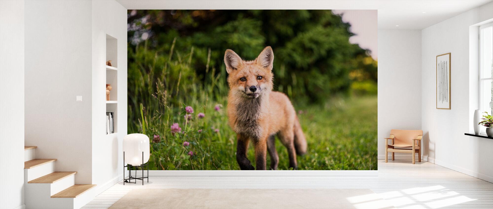 Nysgjerrig Fox - Tapet - Gang