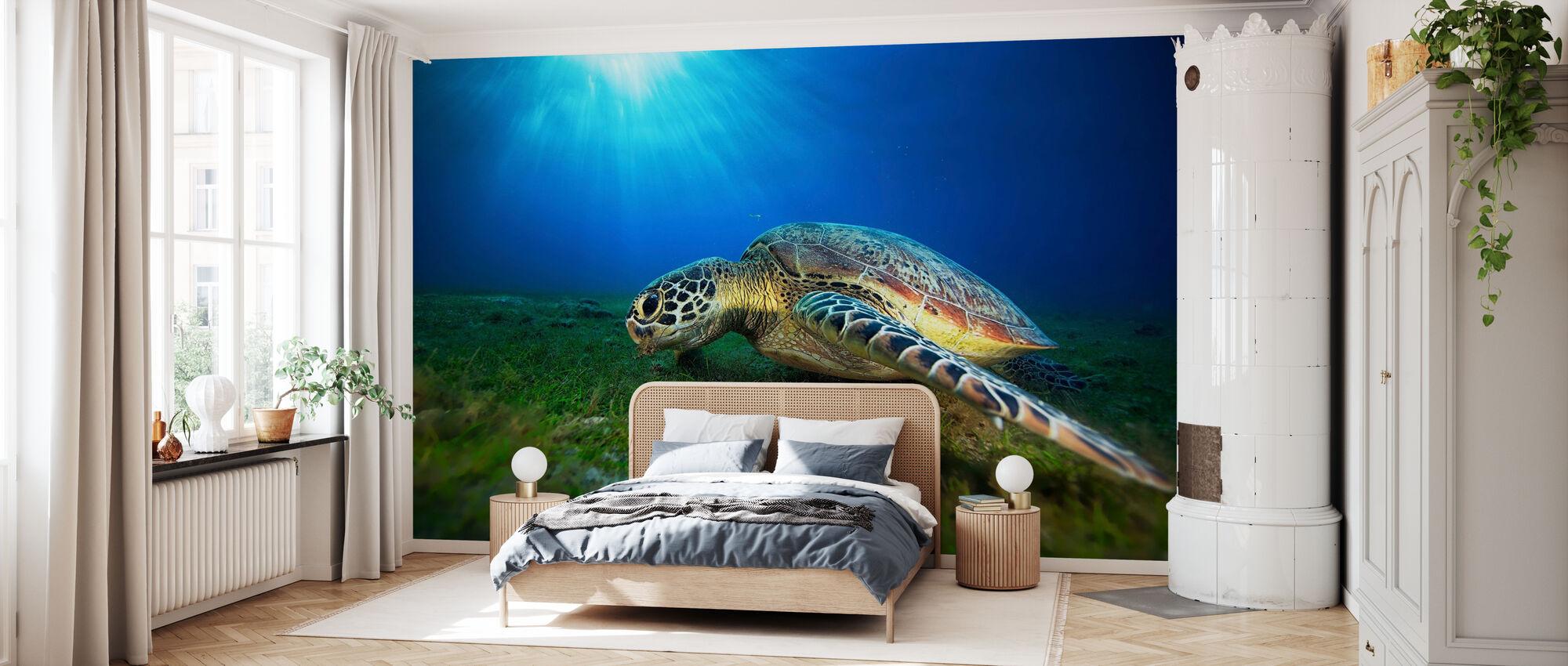 Green Turtle - Wallpaper - Bedroom