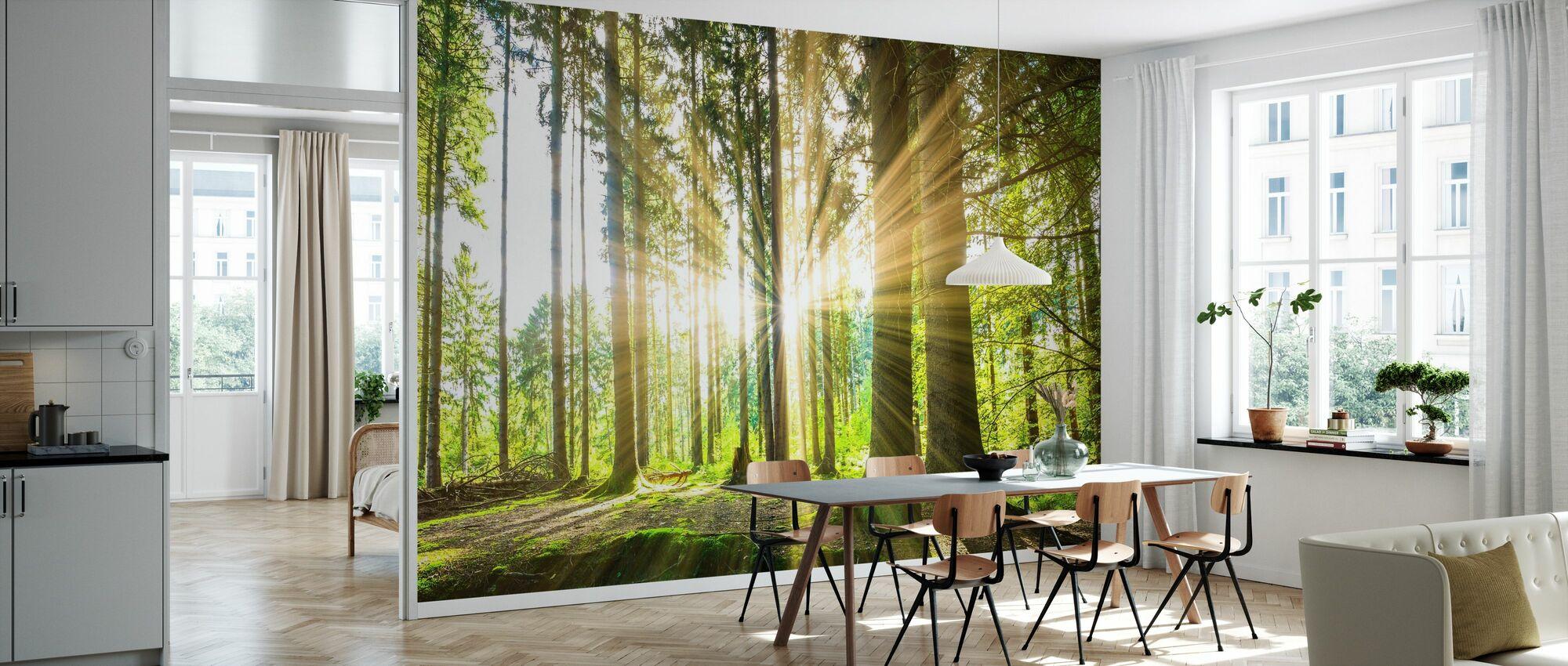 Wald mit Sonne - Tapete - Küchen