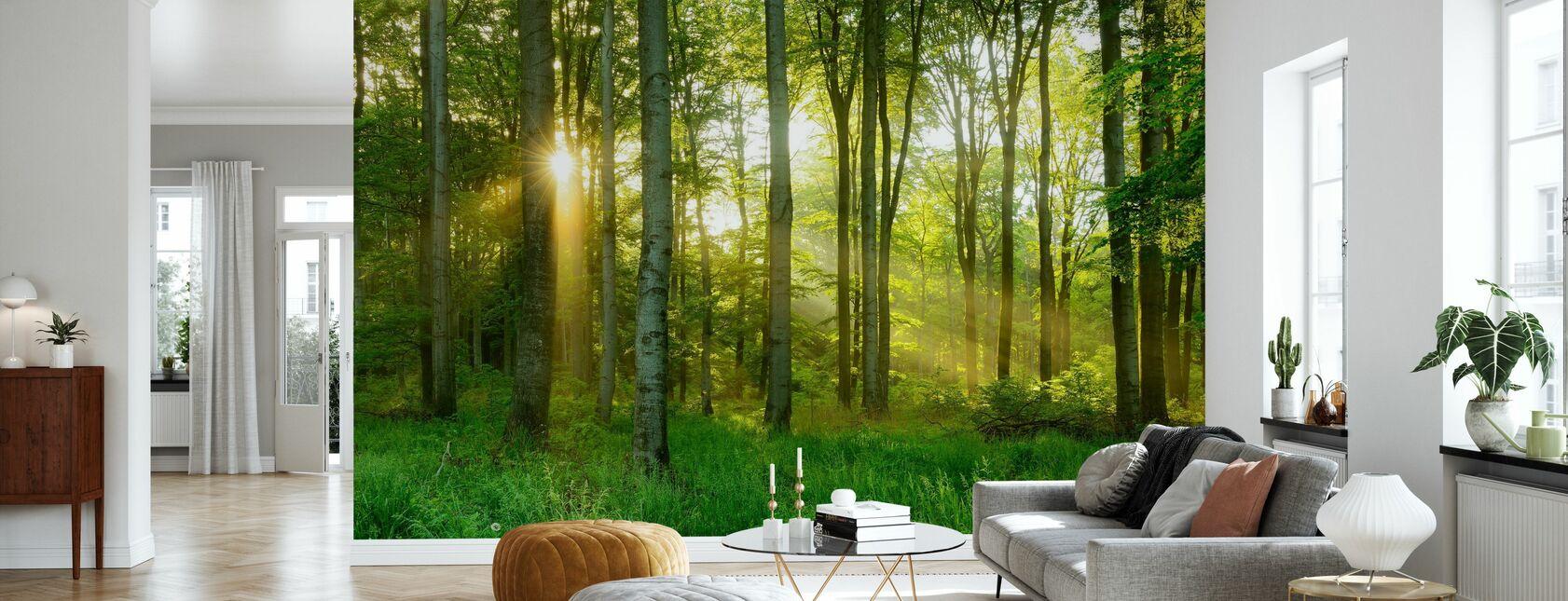 Beech Tree Forest - Wallpaper - Living Room