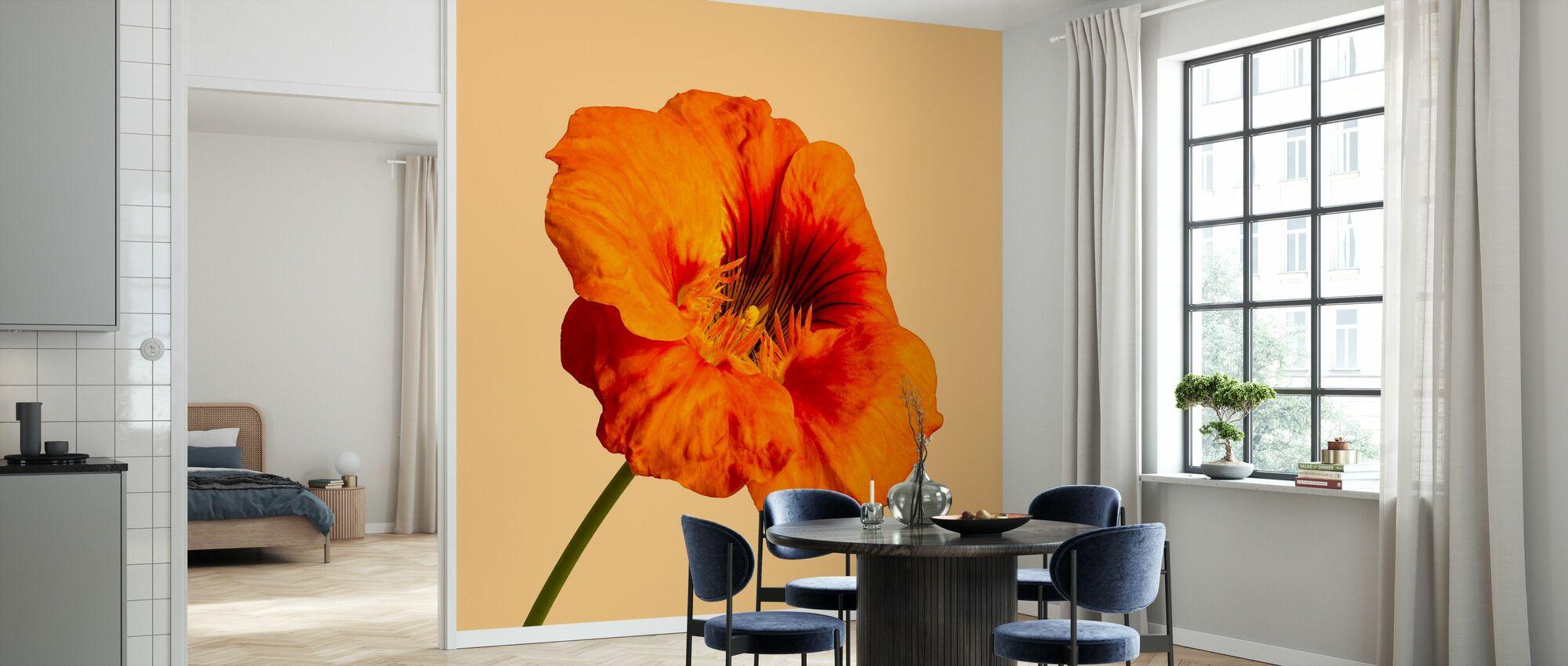 Blomstrende Hibiscus - Tapet - Køkken