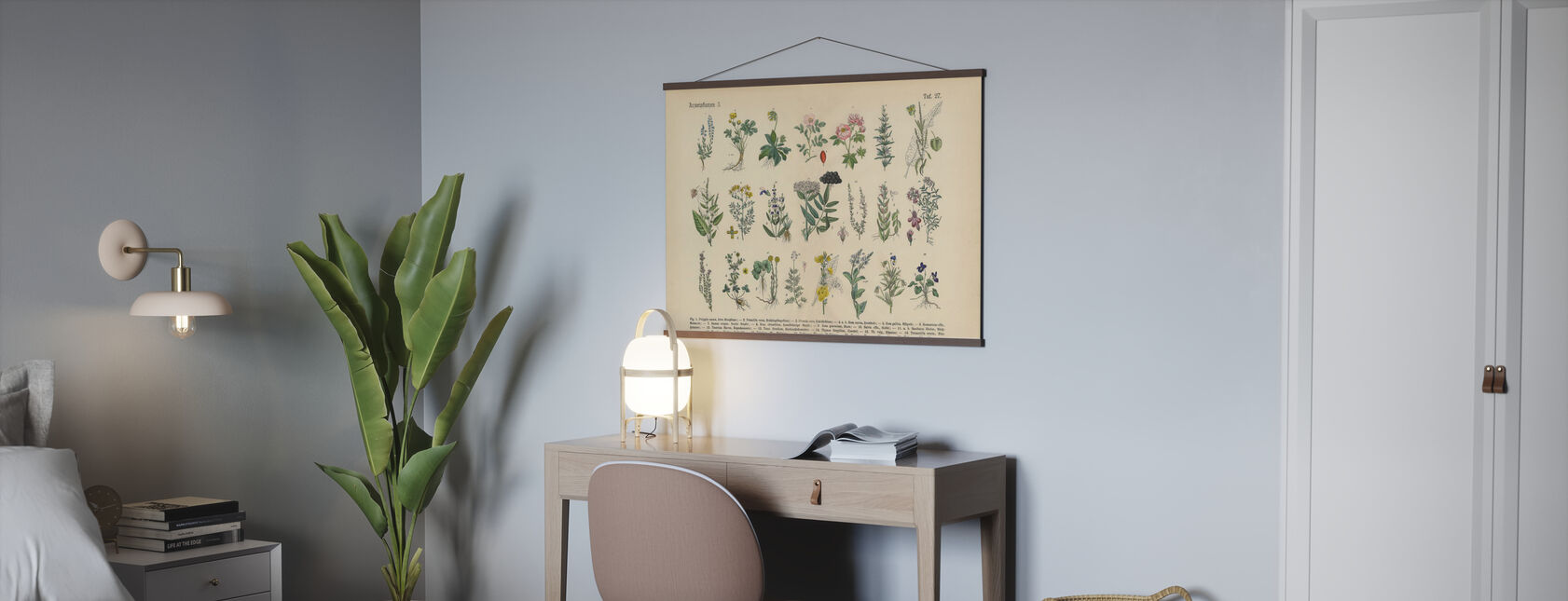 Piante medicinali ed erboristiche - Poster - Uffici