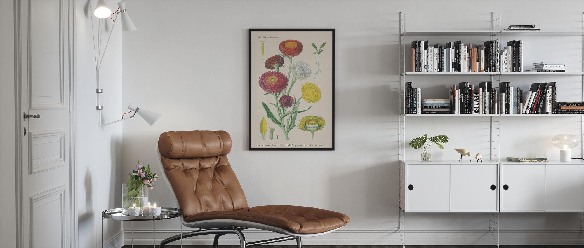 Antique Botanical - Framed print - Living Room