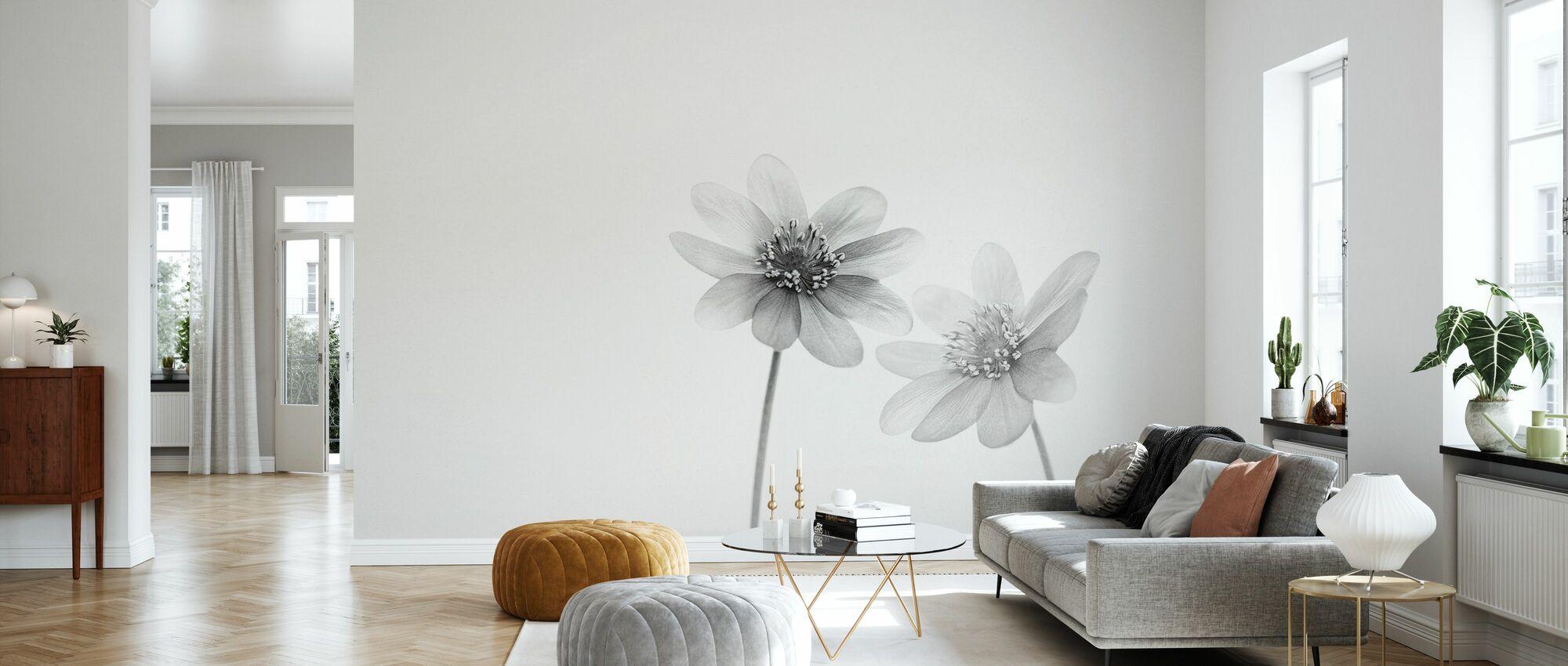 Anemones - Wallpaper - Living Room