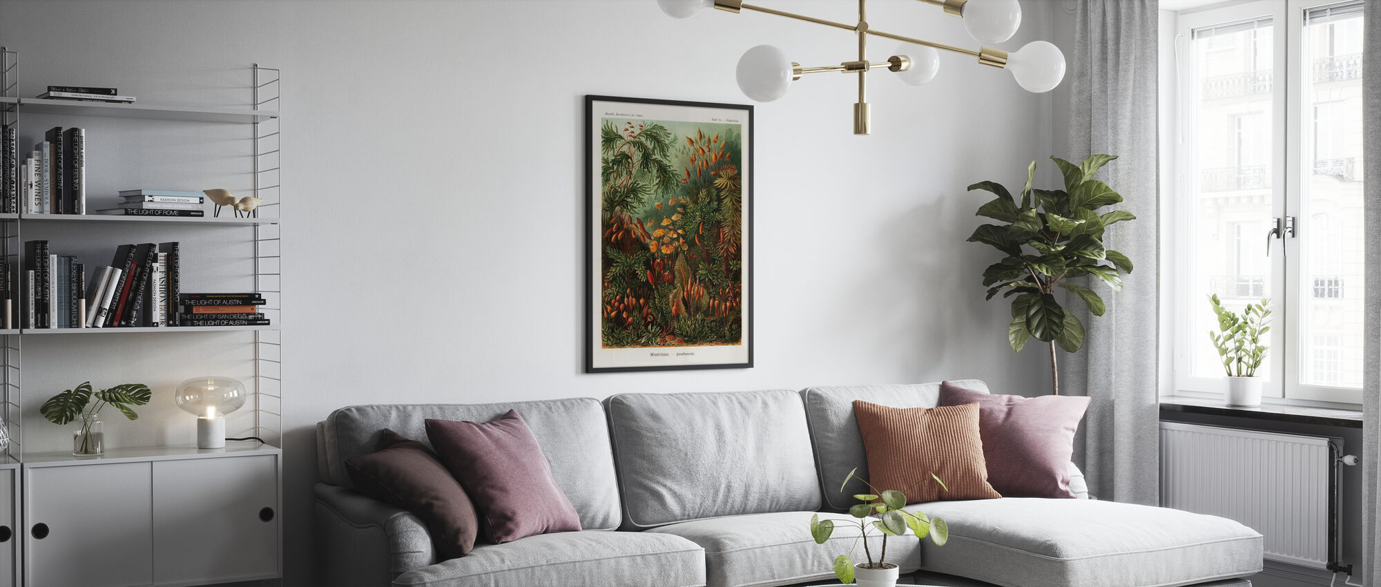 Muscinae Moss kunstformer - Ernst Haeckel - Plakat - Stue