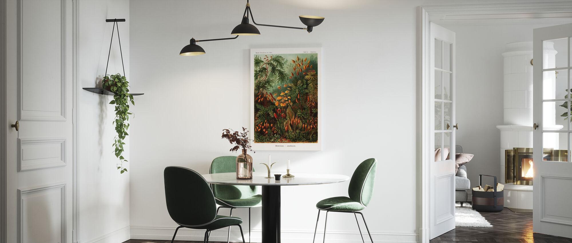 Muscinae Moss Art Forms - Ernst Haeckel - Canvas print - Kitchen