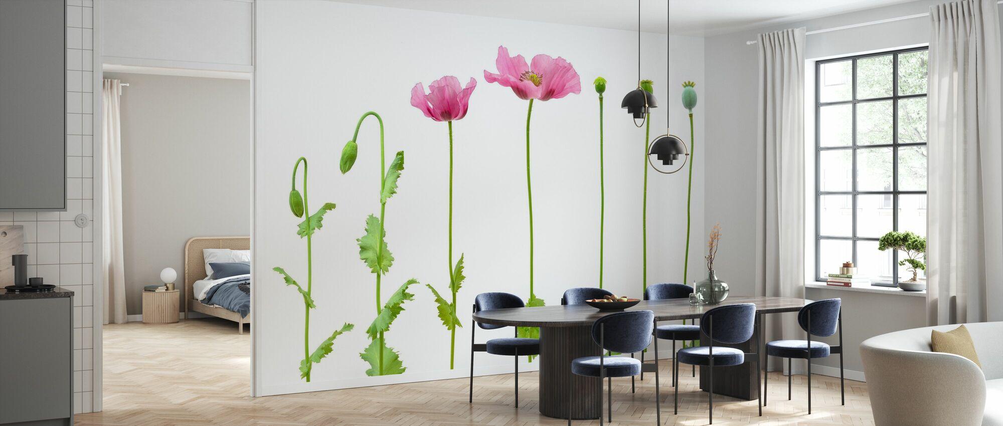 Evolution of Opium Poppy - Wallpaper - Kitchen
