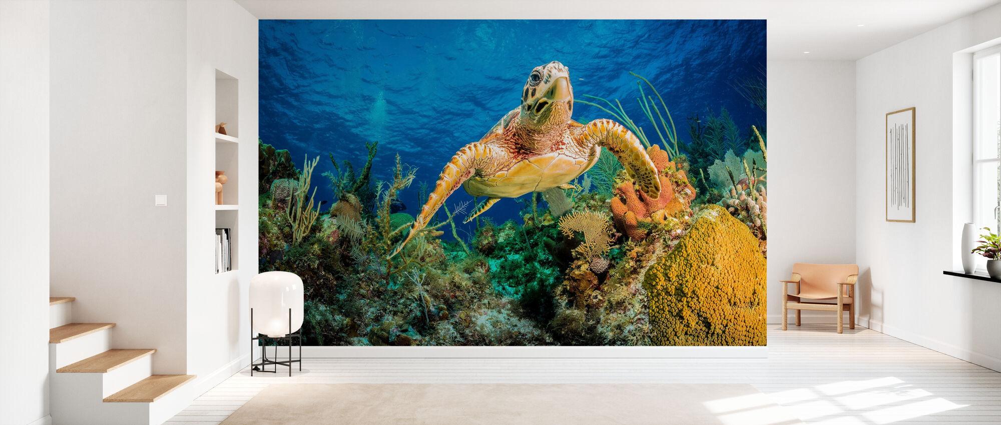 Hawksbill Turtle Swimming - Wallpaper - Hallway