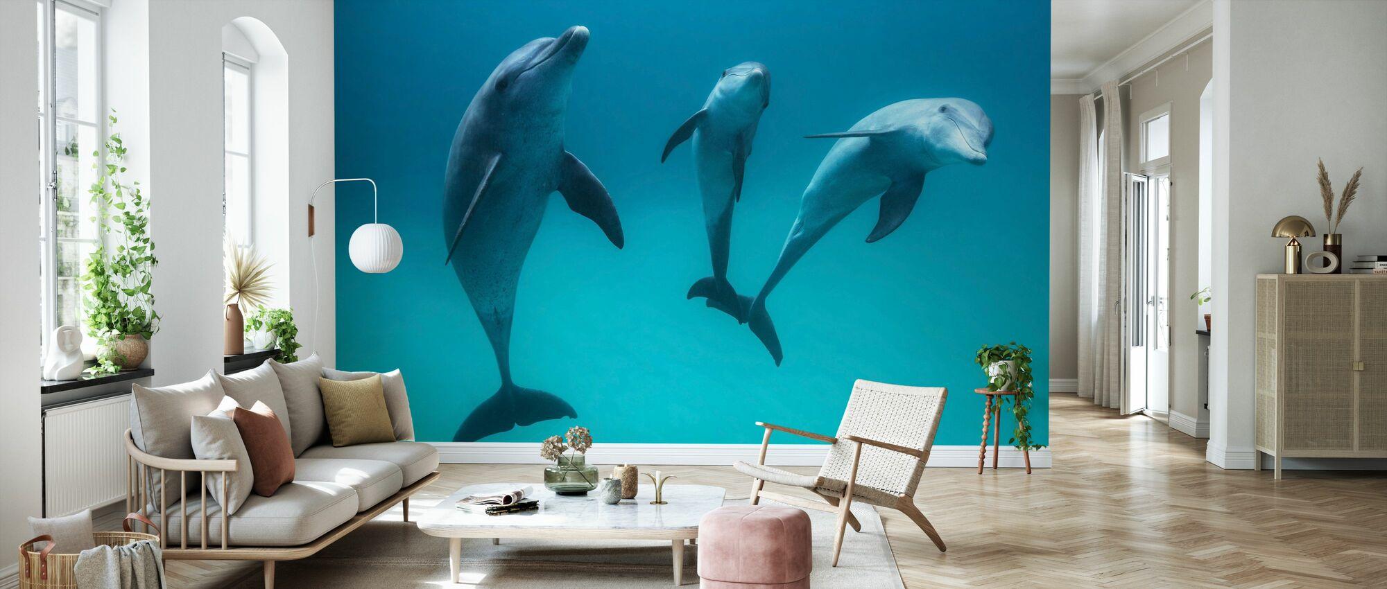 Bottlenose Dolphin - Wallpaper - Living Room