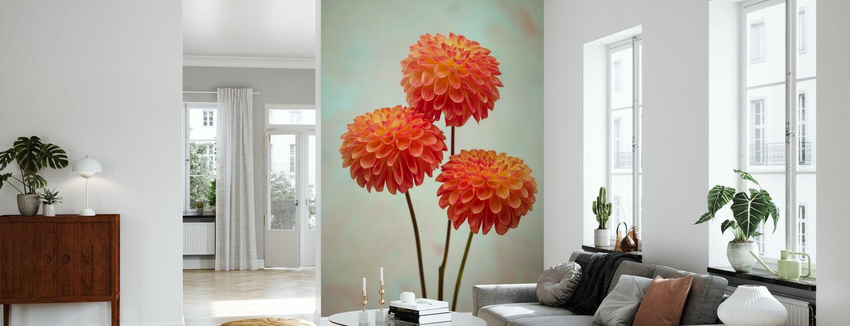 Red - Dahlias - Wallpaper - Living Room