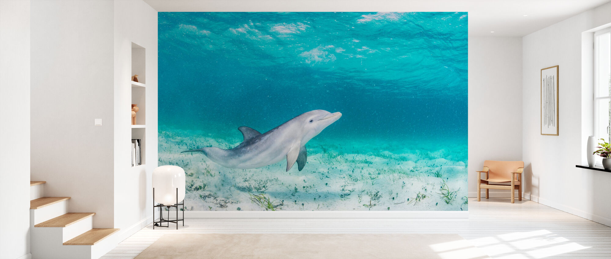 Bottlenose Dolphin Playing - Wallpaper - Hallway