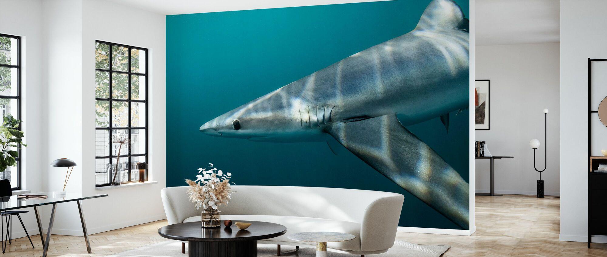 Blue Shark off Halifax - Wallpaper - Living Room
