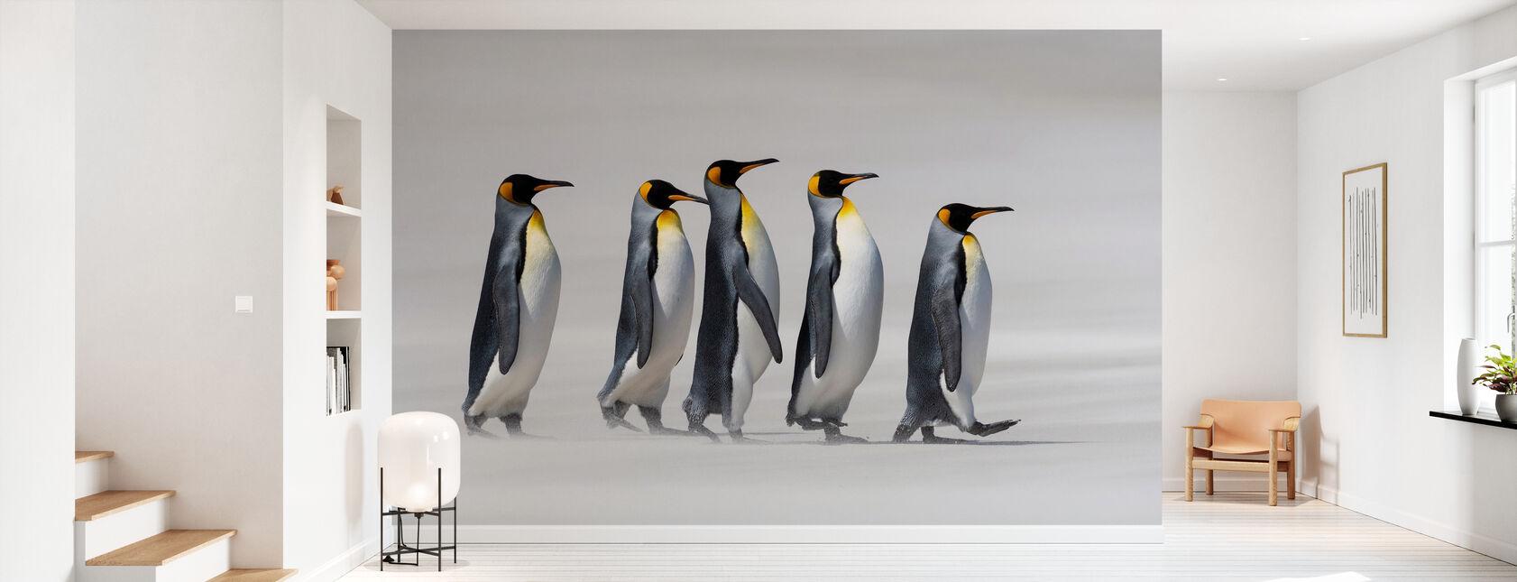 King Penguins - Falklands - Wallpaper - Hallway