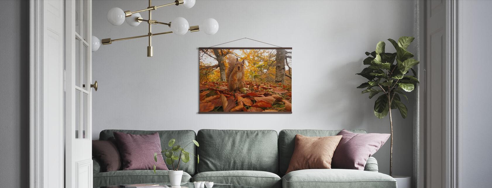 Røde ekorn i bladkull - Plakat - Stue